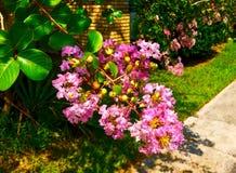 Schließen Sie oben von den rosa Blumen nahe bei einem Bürgersteig Lizenzfreie Stockfotografie
