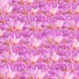 Schließen Sie oben von den rosafarbenen Blumen Lizenzfreie Stockbilder