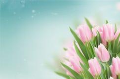 Schließen Sie oben von den rosafarbenen Tulpen lizenzfreies stockfoto