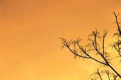 Schließen Sie oben von den trockenen lokalisierten Bäumen, agsinst Himmel stockfoto
