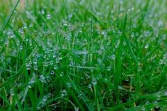 Schließen Sie oben von den Wasser-Tröpfchen und dem Gras Stockfotos