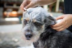Schließen Sie oben von den weiblichen Händen, die Hund pflegen Stockfoto