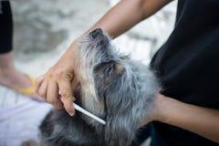 Schließen Sie oben von den weiblichen Händen, die Hund pflegen Lizenzfreie Stockfotografie