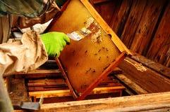Schließen Sie oben von der alter Mann-menschlichen Hand, die Honig von der gelben Bienenwabe im Freienextrahiert Stockbild