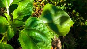 Schließen Sie oben von der Anlage mit grünen Blättern Stockfoto