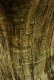 Schließen Sie oben von der Baumbarke Lizenzfreie Stockbilder