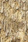 Schließen Sie oben von der Baumrindebeschaffenheit Lizenzfreies Stockbild