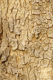 Schließen Sie oben von der Baumrindebeschaffenheit Stockbilder