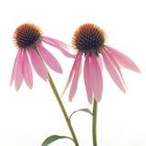 Schließen Sie oben von der Blume Stockfoto