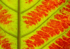 Schließen Sie oben von der bunten Herbstlaubbeschaffenheit Stockfotografie