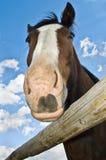 Schließen Sie oben von der eindeutigen Perspektive des Pferdenkopfes lizenzfreies stockfoto