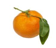 Schließen Sie oben von der frischen Mandarine Lizenzfreie Stockfotos