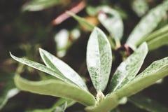 Schließen Sie oben von der Grünpflanze in der Waldeinstellung Stockfoto