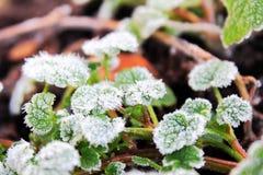 Schließen Sie oben von der Grünpflanze des hellen ersten Frühlinges Lizenzfreies Stockfoto