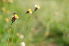 Schließen Sie oben von der Grasblume Stockbilder