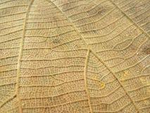 Schließen Sie oben von der Linie Detail auf trockenem Blattbeschaffenheitshintergrund Stockfotos