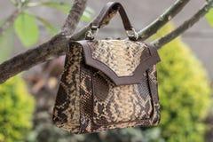 Schließen Sie oben von der Luxustasche stilvoller weiblicher snakseskin Pythonschlange draußen Teure weibliche Tasche der moderne lizenzfreies stockbild