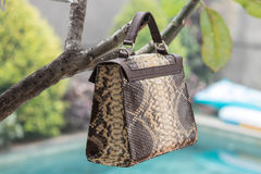 Schließen Sie oben von der Luxustasche stilvoller weiblicher snakseskin Pythonschlange draußen Teure weibliche Tasche der moderne stockbilder