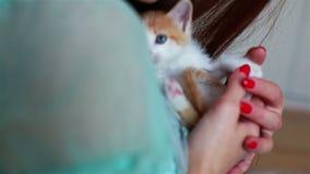 Schließen Sie oben von der netten Miezekatze in Frau ` s Händen stock video