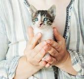 Schließen Sie oben von der netten Miezekatze in Frau ` s Händen Hübsche Frau, die nah eine Katze zur Kamera hält Entzückende Miez stockfotos