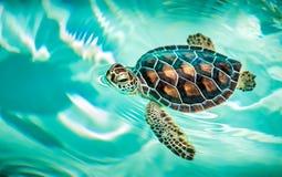 Schließen Sie oben von der netten Schildkröte Stockfotografie