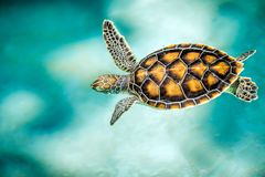 Schließen Sie oben von der netten Schildkröte Lizenzfreie Stockfotografie