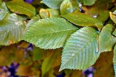 Schließen Sie oben von der Oberfläche eines Blattes im Herbst Lizenzfreie Stockfotografie