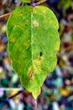 Schließen Sie oben von der Oberfläche eines Blattes im Herbst Lizenzfreie Stockbilder
