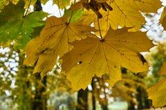 Schließen Sie oben von der Oberfläche eines Blattes im Herbst Stockbild