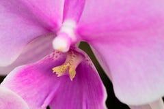 Schließen Sie oben von der Orchideenblume Ausführliche vektorzeichnung Selektiver Fokus Stockfotos