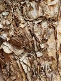 Schließen Sie oben von der Papierbarke des afrikanischen Dornenbaums lizenzfreie stockfotografie