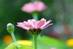 Schließen Sie oben von der purpurroten Blume Stockbilder