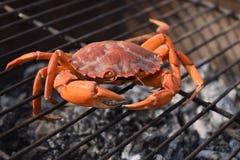 Schließen Sie oben von der rohen Krabbe auf einem Grill Stockbild