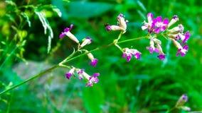 Schließen Sie oben von der rosafarbenen Blume Farbige handgemachte Abbildung Stockfotografie
