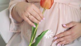 Schließen Sie oben von der schwangeren Hand, die Tulpe hält und Bauch mit ihm streicht 4K stock video