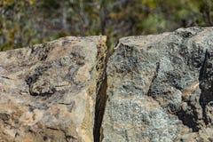 Schließen Sie oben von der Spalte im vulkanischen Felsen und unscharfe grüne Kiefer und Anlagen im bfckground Nationalpark Teide, stockfoto