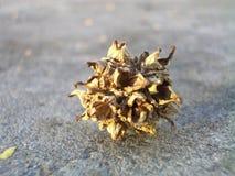 Schließen Sie oben von der Trockenblume-Hülsen auf Beton lizenzfreies stockfoto