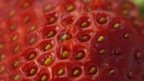 schließen Sie oben von der Wassernase auf Erdbeere stock video