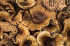 Schließen Sie oben von der wilden Pilzgruppe Stockbilder