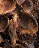 Schließen Sie oben von der wilden Pilzgruppe Stockfotografie