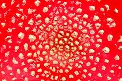 Schließen Sie oben von der Wulstling muscaria Pilzkappe Lizenzfreies Stockfoto