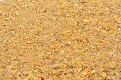 Schließen Sie oben von der Zufuhr für Henne lizenzfreie stockbilder