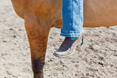 Schließen Sie oben von einem Bein und von einem Pferd Lizenzfreie Stockfotografie