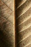 Schließen Sie oben von einem Blatt, gloden Braun im Herbst Lizenzfreie Stockfotos