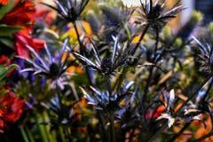Schließen Sie oben von einem Blumenstrauß von dunklen Blumen lizenzfreie stockfotos
