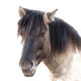 Schließen Sie oben von einem braunen Pferdeportrait, lokalisiert Stockfoto