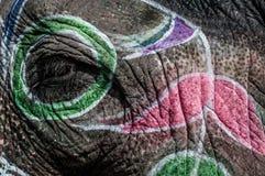 Schließen Sie oben von einem Elefanten Stockbilder