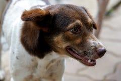 Schließen Sie oben von einem Hund mit braunem Gesicht Lizenzfreie Stockbilder