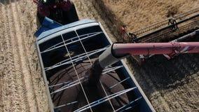 Schließen Sie oben von einem Mähdrescher, der die Ernten in den LKW, 4k gießt stock video