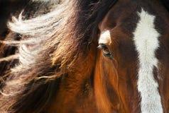 Schließen Sie oben von einem Pferdeauge bei Sonnenuntergang Lizenzfreies Stockbild